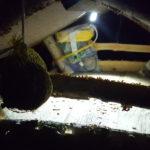 Vogelhaus LED Beleuchtung