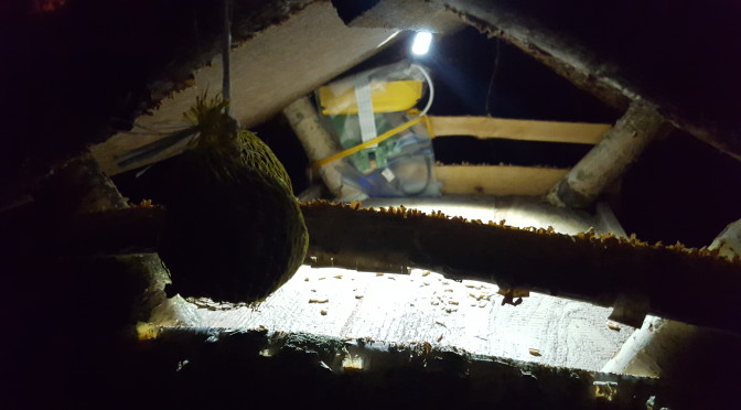 Vogelhaus Beleuchtung mit LEDs oder Infrarot