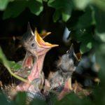Vogelhauskameras im Vergleich