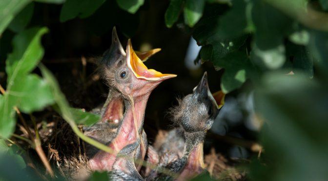 Vogelhauskameras - Nistkasten mit Funkkamera für Tierbeobachtung