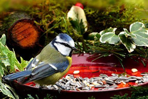 Das richtige Vogelfutter