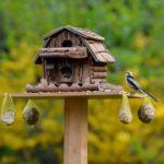 Wissenswertes zum Füttern von Vögeln: darauf sollten Sie achten