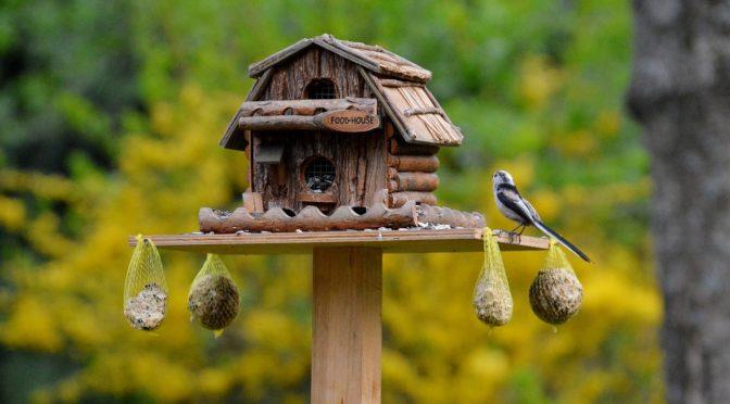 Alles Wissenswerte zum Füttern von Vögeln