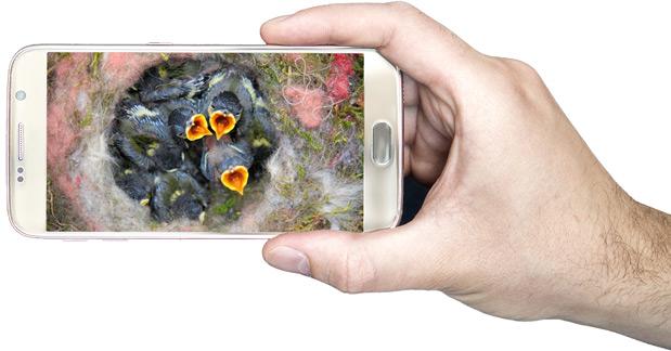 Nistkasten mit Kamera auf Smartphone