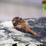 Vogel gefunden - Erste Hilfe für verletzte Vögel