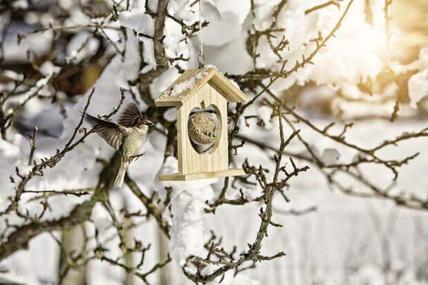 Meisenknödelhalter Winter