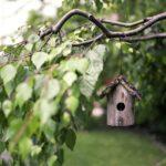 Mit diesen 5 Tipps wird Ihr Garten vogelfreundlich