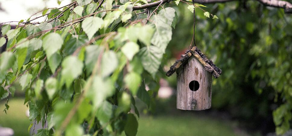 vogelfreundlicher-Garten-5Tipps