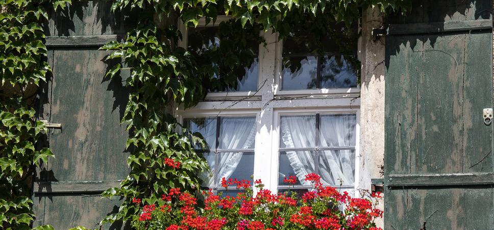 vogelfreundlicher-Garten-Hauswand