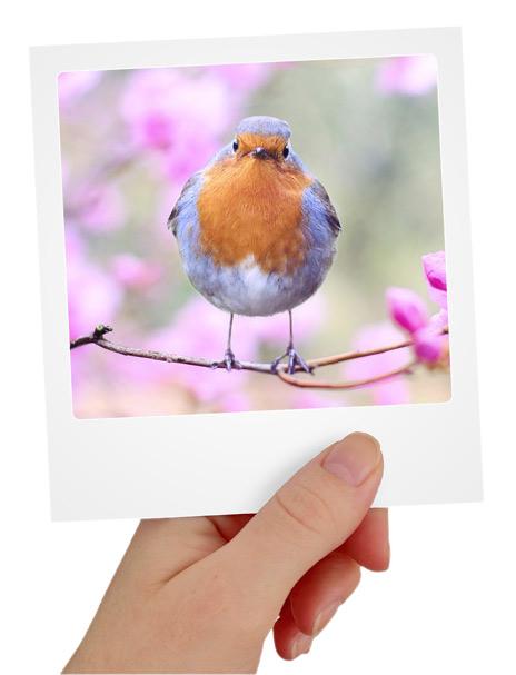 Fotoalbum-Gartenvögel