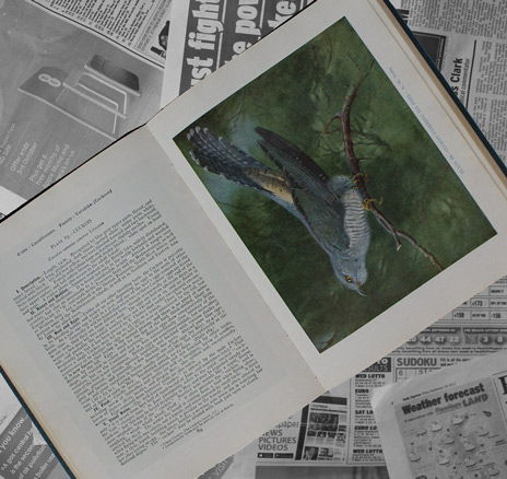 Vogel-Bestimmungsbuch