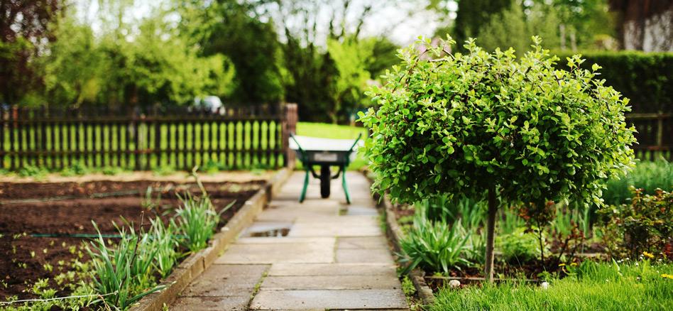 igelfreundlicher-Garten