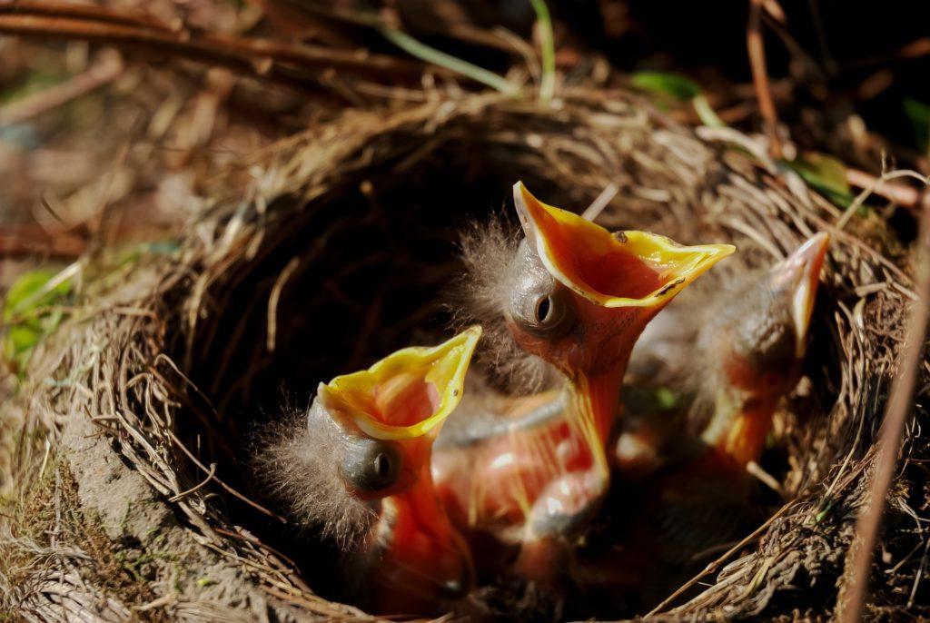 Geschenk für Vogelliebhaber und Naturfans