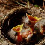 Die 10 besten Geschenkideen für Vogelliebhaber