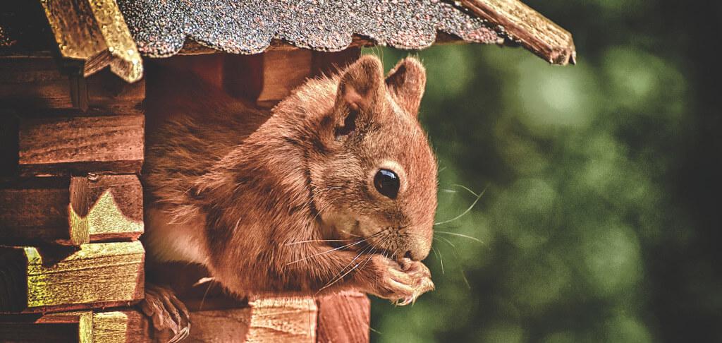 Eichhörnchen-Vogelhaus